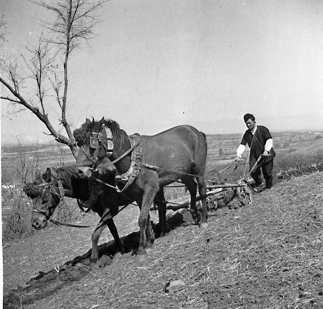 Панчарево, Софийско, 40-те години на миналия век
